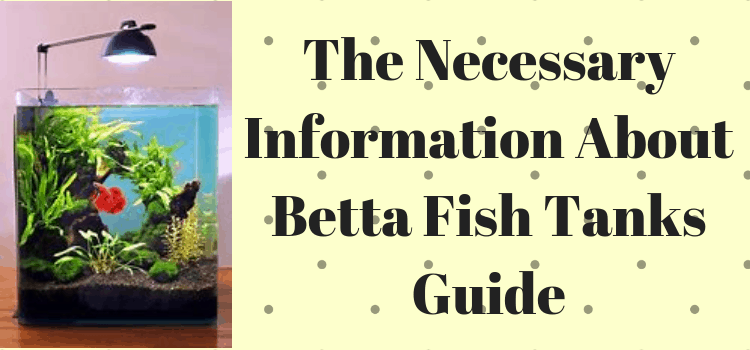 the necessary information about betta fish tanks guide pets care tips